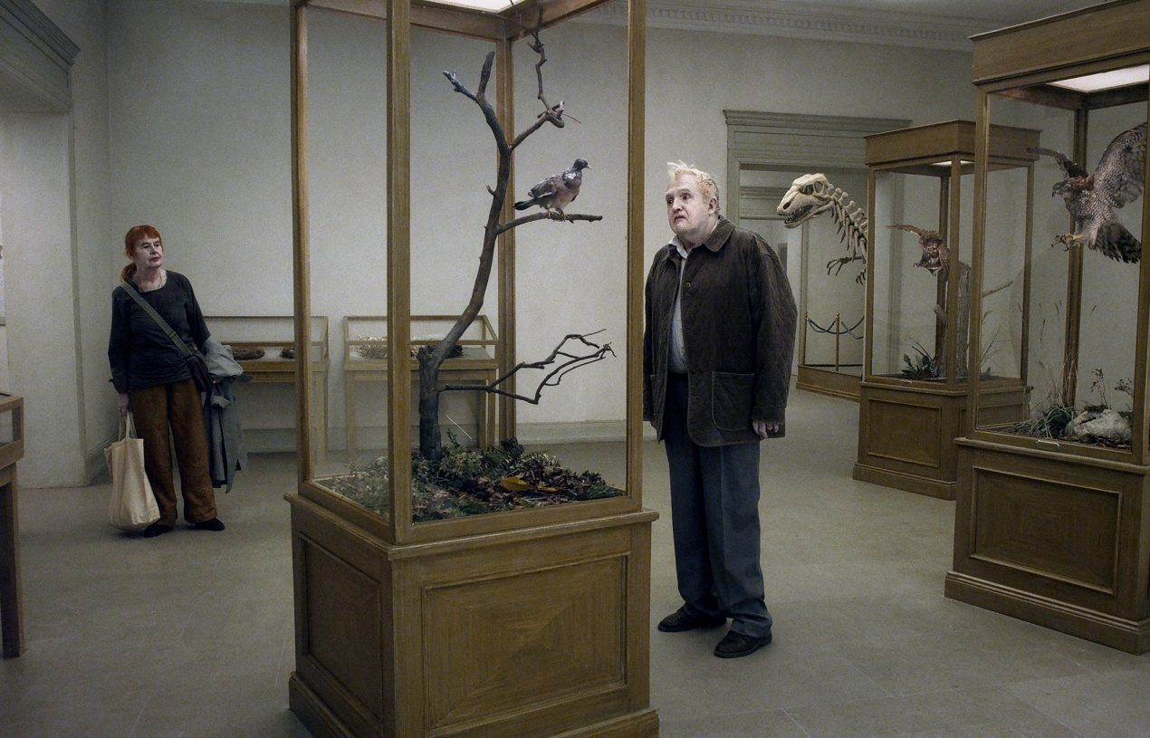 A pigeon sat on a branch reflecting on cinema